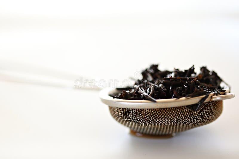 Hojas del té imágenes de archivo libres de regalías