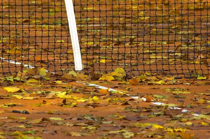 Hojas del tenis fotografía de archivo