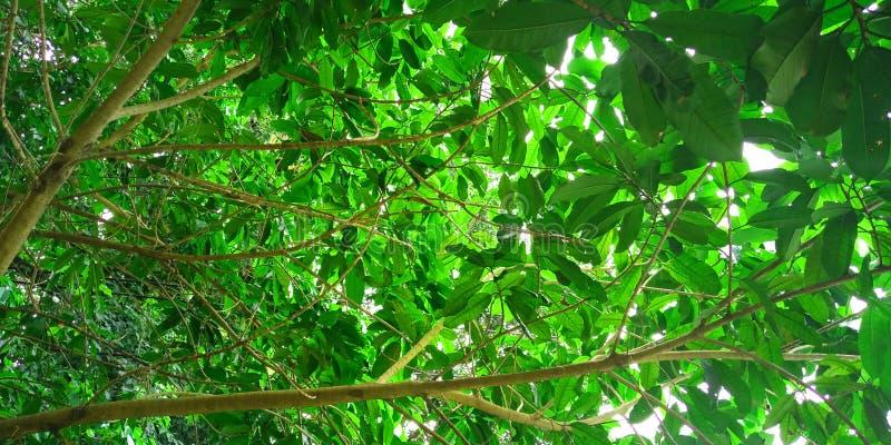 Hojas del verde del árbol fotos de archivo