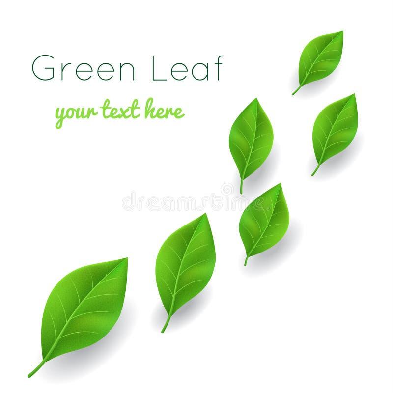 Hojas del verde stock de ilustración