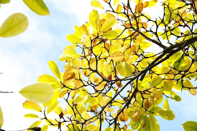 Hojas del verde amarillo debajo del cielo azul foto de archivo