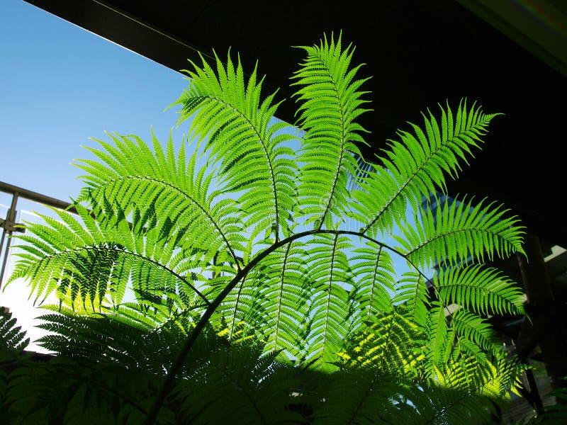 Hojas del verde bajo luz del sol fotos de archivo