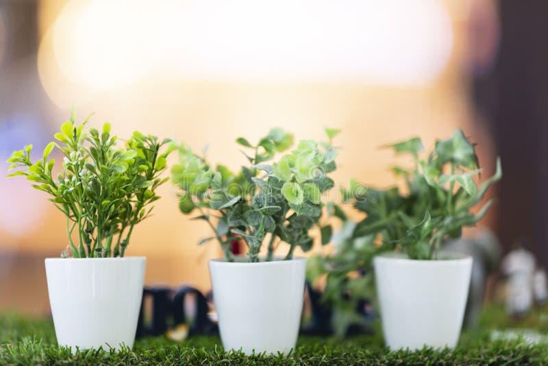 Hojas del verde colocadas en los potes blancos imagenes de archivo