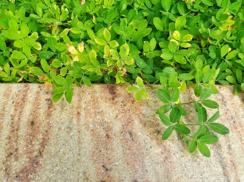 Hojas del verde con el fondo de mármol foto de archivo libre de regalías