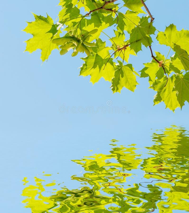 Hojas del verde contra el cielo azul ilustración del vector