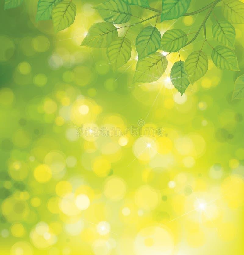 Hojas del verde del vector en fondo de la sol. stock de ilustración