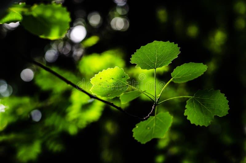 Hojas del verde en el bosque fotografía de archivo