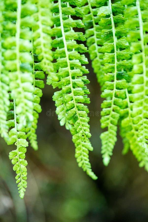 Hojas del verde en el cielo azul fotografía de archivo