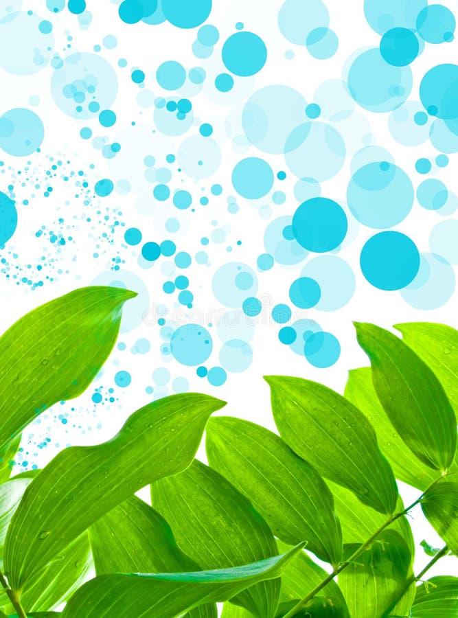 Hojas del verde en fondo del oxígeno foto de archivo libre de regalías