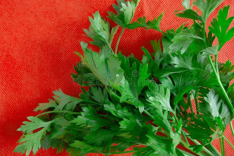 Hojas del verde en fondo rojo Manojo fresco del perejil en tela viva del contraste Concepto de la primavera y de la comida de la  fotos de archivo