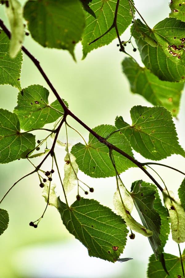 Hojas del verde en la luz del sol fotos de archivo