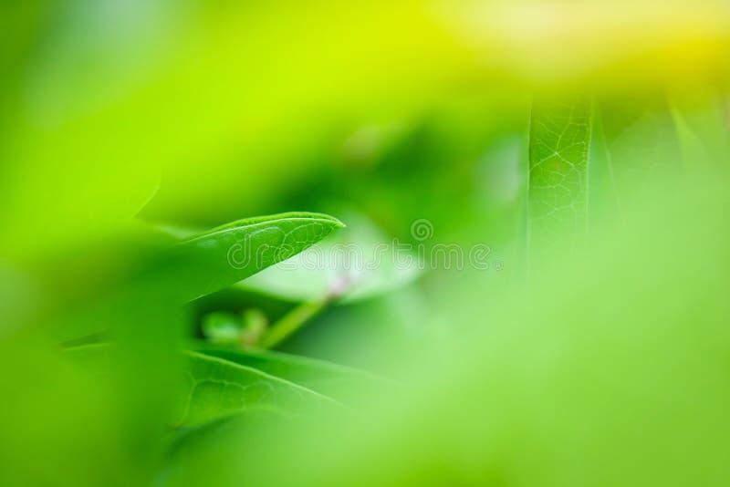 Hojas del verde en naturaleza imagenes de archivo