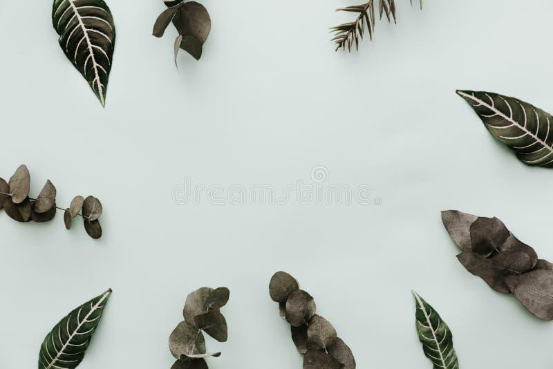 hojas del verde Escena minimalista neutral de la endecha del plano con el eucalipto fotos de archivo libres de regalías