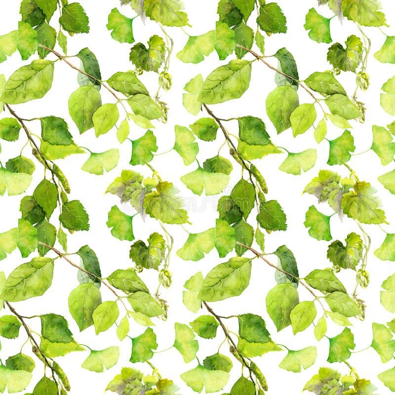 hojas del verde Relanzar el modelo watercolor stock de ilustración
