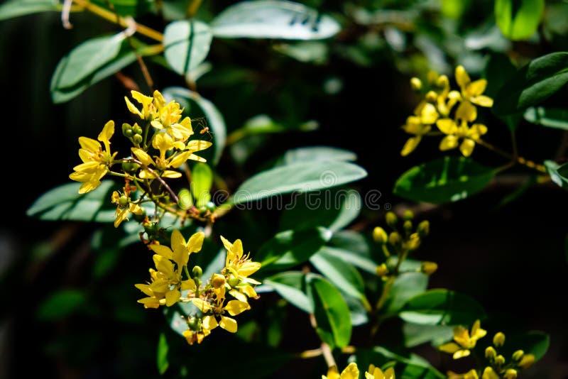 Hojas del verde y flores amarillas con la luz del sol que brilla a través, a fotos de archivo