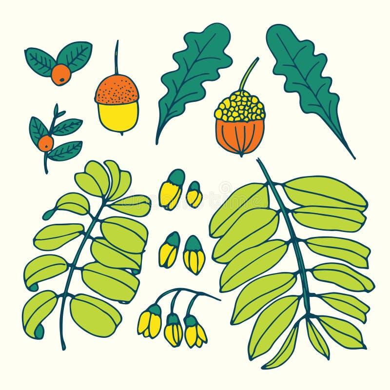 Hojas dibujadas mano del árbol fijadas libre illustration