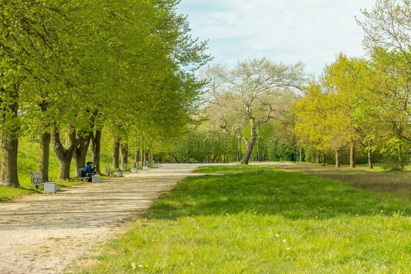 Hojas e hierba de la primavera en parque con la trayectoria y el banco fotografía de archivo