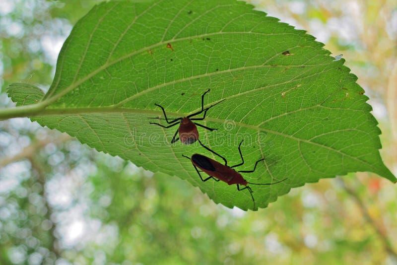 Hojas e insectos verdes el d?a soleado fotos de archivo libres de regalías