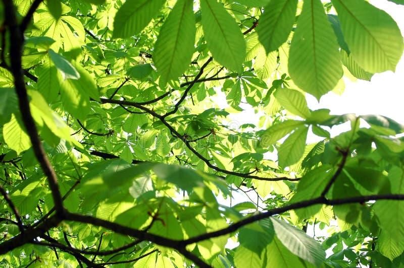 Hojas en árbol fotografía de archivo libre de regalías