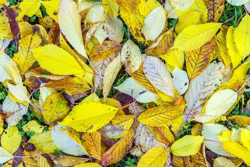 Hojas en color del otoño imagen de archivo libre de regalías
