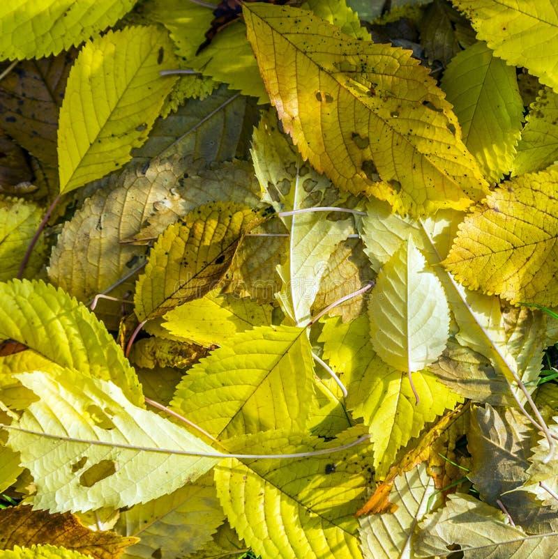 Hojas en color del otoño foto de archivo