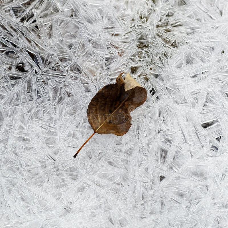 Hojas en corriente congelada de la cala del hielo foto de archivo