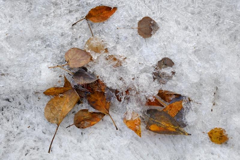 Hojas en corriente congelada de la cala del hielo fotos de archivo libres de regalías