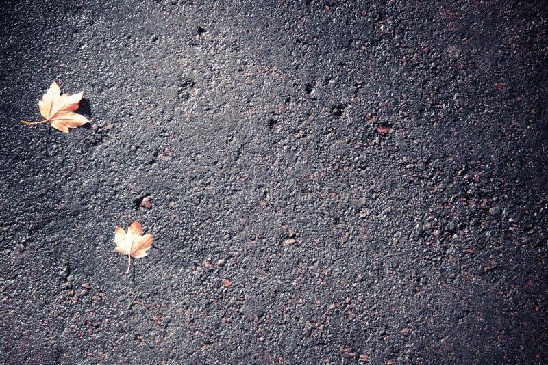 Hojas en el pavimento fotografía de archivo libre de regalías