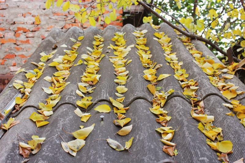 Hojas en el tejado Oto?o fotos de archivo libres de regalías