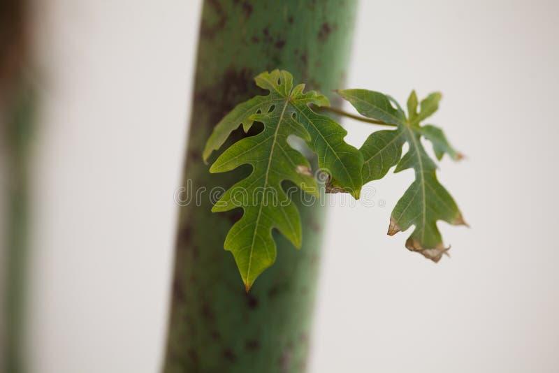 Hojas en el tronco de una planta fotografía de archivo