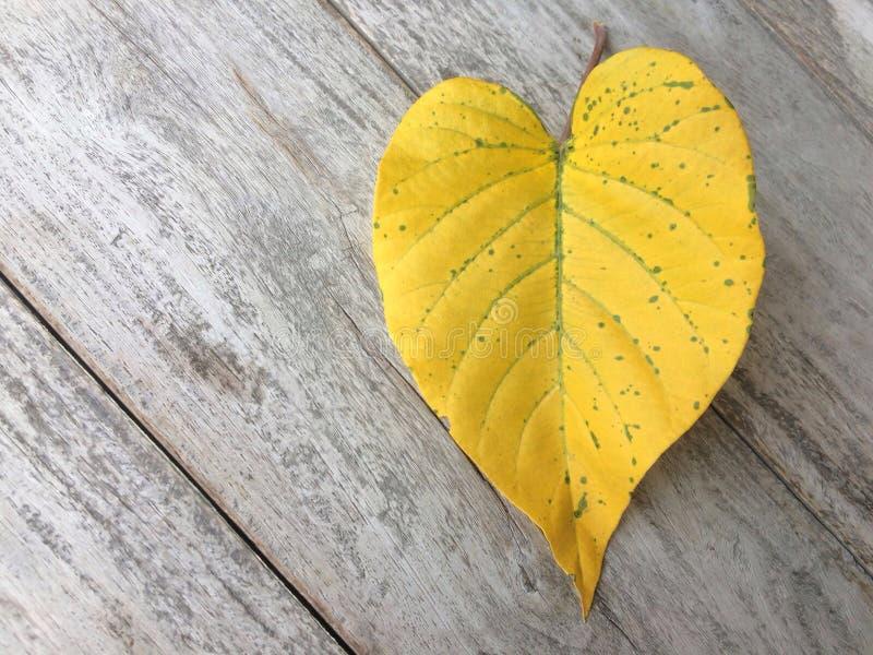 Hojas en forma de corazón del amarillo en los viejos tableros de madera fotografía de archivo