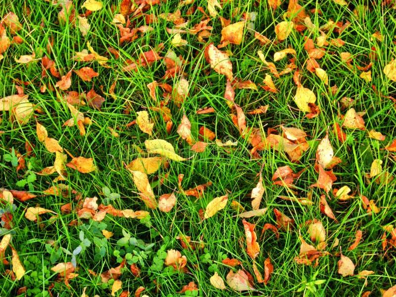 Hojas en hierba verde imagen de archivo