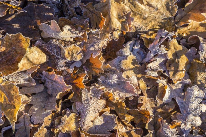 Hojas en la tierra en modelo armónico fotografía de archivo