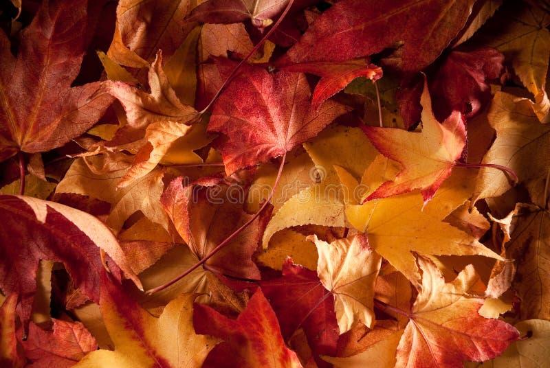 Hojas en otoño foto de archivo