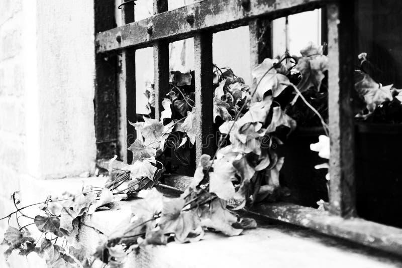 Hojas en potes en una ventana romántica en Venecia fotografía de archivo libre de regalías