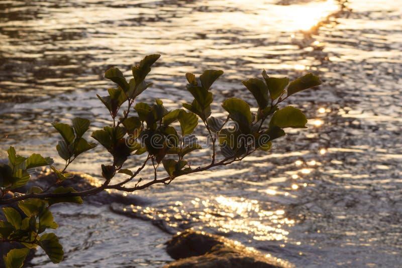 Hojas en puesta del sol delante del agua que riela imagen de archivo