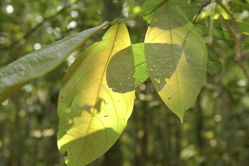 Hojas en selva tropical imagen de archivo libre de regalías