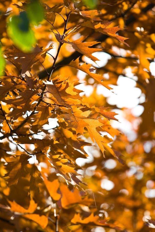 Hojas en un árbol fotos de archivo libres de regalías
