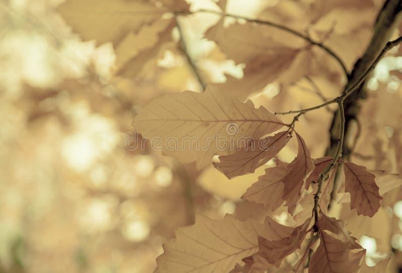 Hojas en un árbol, estación del otoño foto de archivo libre de regalías