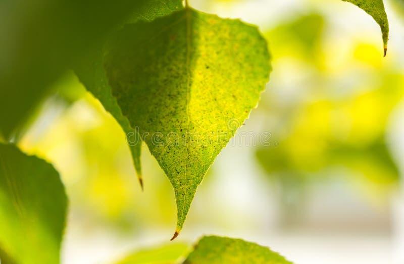 Hojas en un fondo borroso, hojas de otoño fotografía de archivo