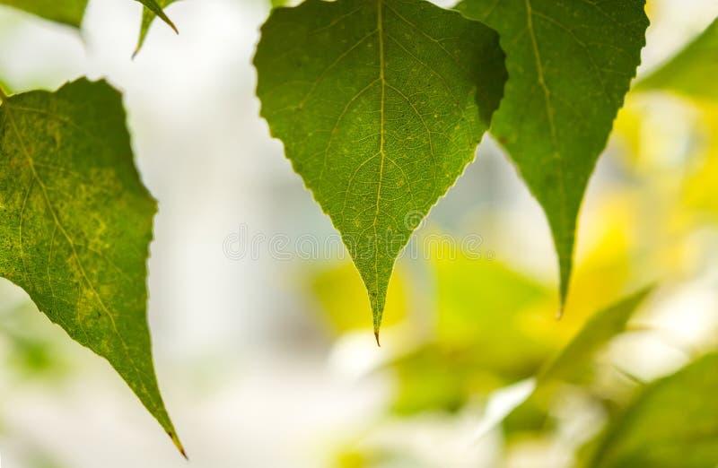 Hojas en un fondo borroso, hojas de otoño foto de archivo