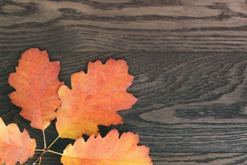 Hojas entonadas vintage del roble del otoño para el fondo imágenes de archivo libres de regalías