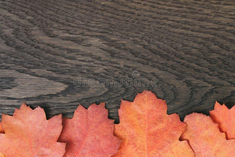 Hojas entonadas vintage del roble del otoño para el fondo fotografía de archivo libre de regalías