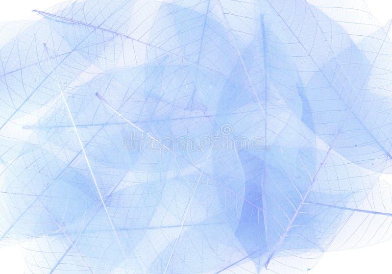 Hojas esqueléticas del azul imagen de archivo