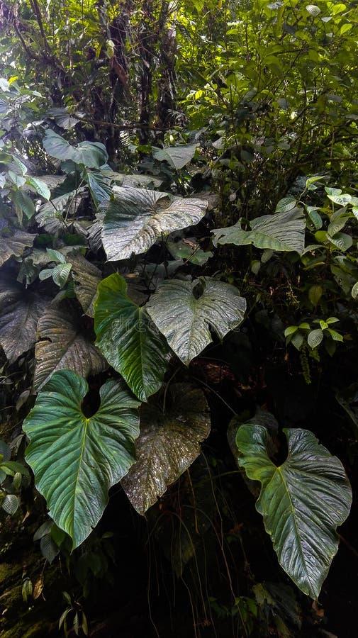 Hojas exóticas amazónicas impresionantes en el medio de la selva imagen de archivo libre de regalías