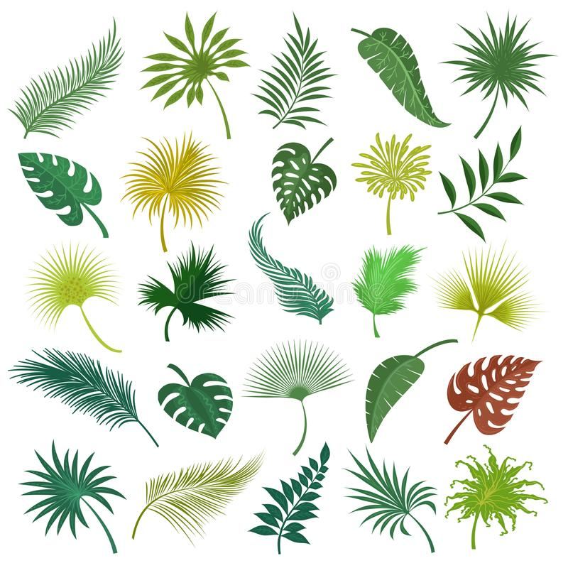 Hojas exóticas de la palma fijadas libre illustration