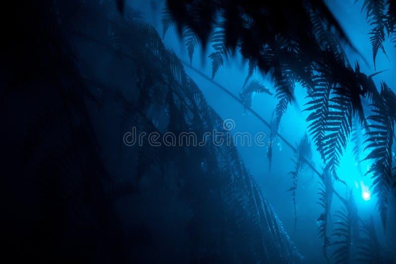 Hojas exóticas hermosas en un bosque tropical con una luz azul que brilla cerca fotografía de archivo libre de regalías