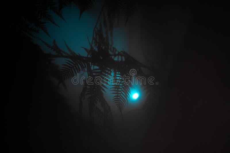Hojas exóticas hermosas en un bosque tropical con una luz azul que brilla cerca foto de archivo libre de regalías