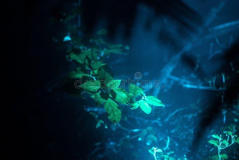 Hojas exóticas hermosas en un bosque tropical con una luz azul que brilla cerca foto de archivo