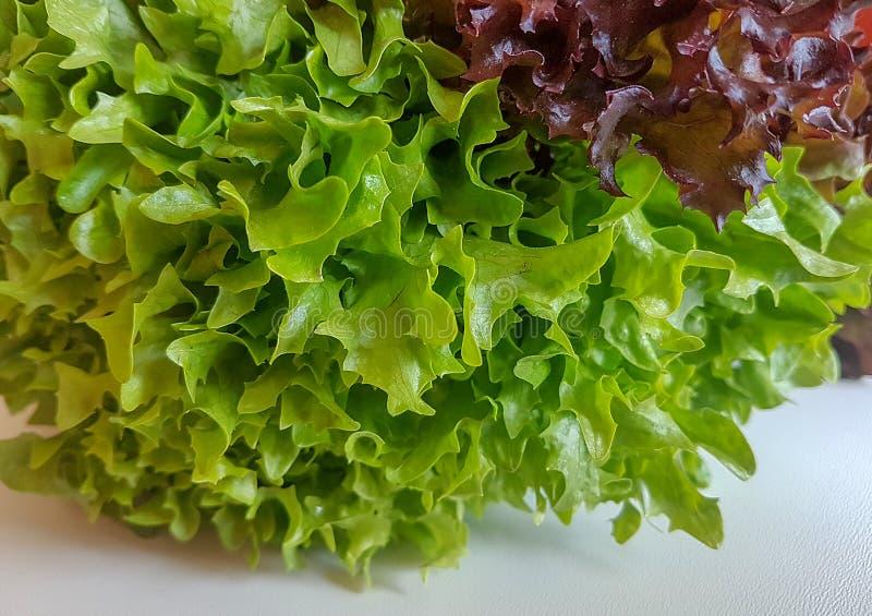 Hojas frescas de la ensalada aisladas en la comida verde del fondo blanco fotografía de archivo